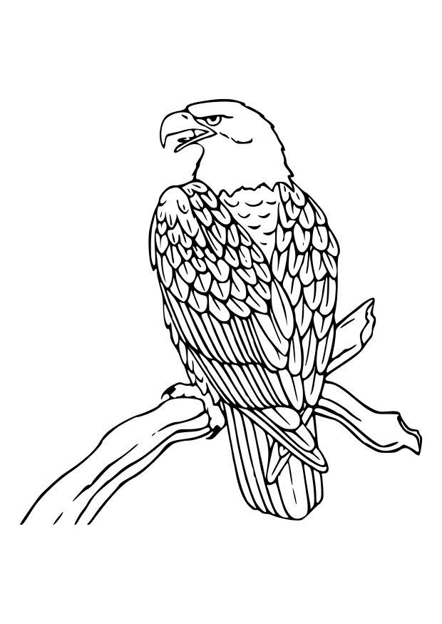 Coloriage a imprimer aigle royal sur une branche gratuit et colorier - Dessin d aigle royal ...