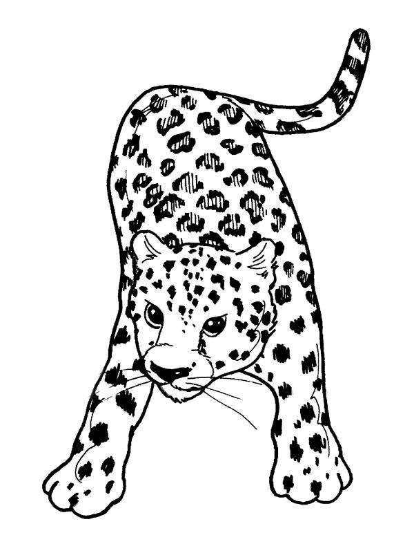 Coloriage Gratuit Bebe Animaux.Coloriage A Imprimer Bebe Leopard Gratuit Et Colorier