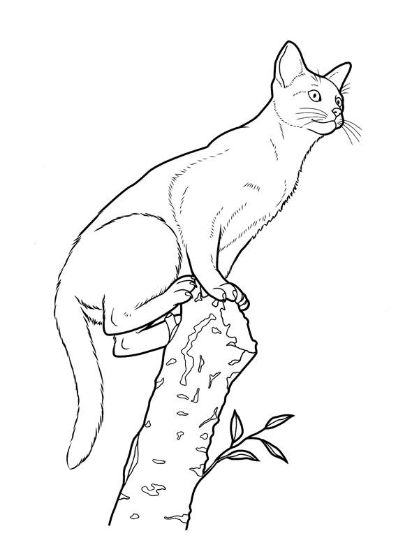 Coloriage a imprimer chat sur le tronc gratuit et colorier - Chat a colorier ...