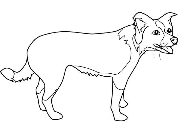Coloriage a imprimer chien border collie gratuit et colorier - Dessin facile chien ...