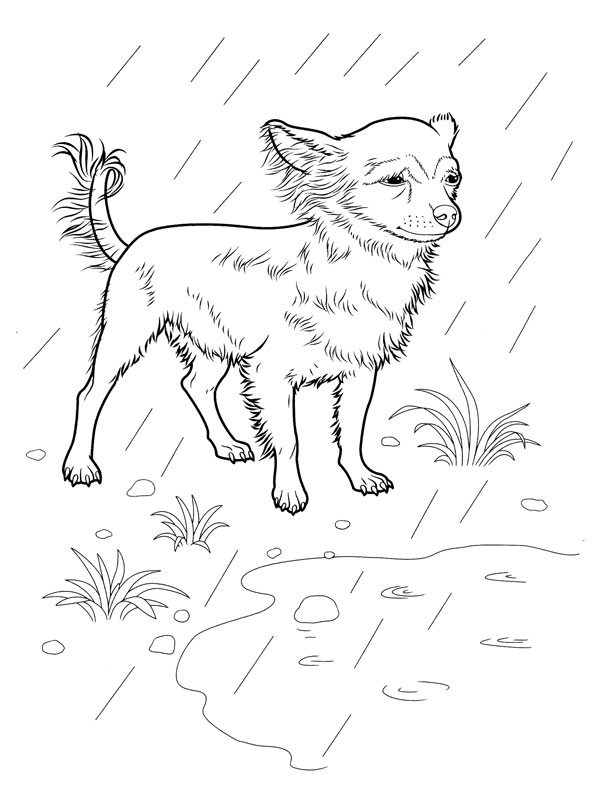 Coloriage a imprimer chien chihuahua sous la pluie gratuit - Coloriage de chien a imprimer gratuit ...