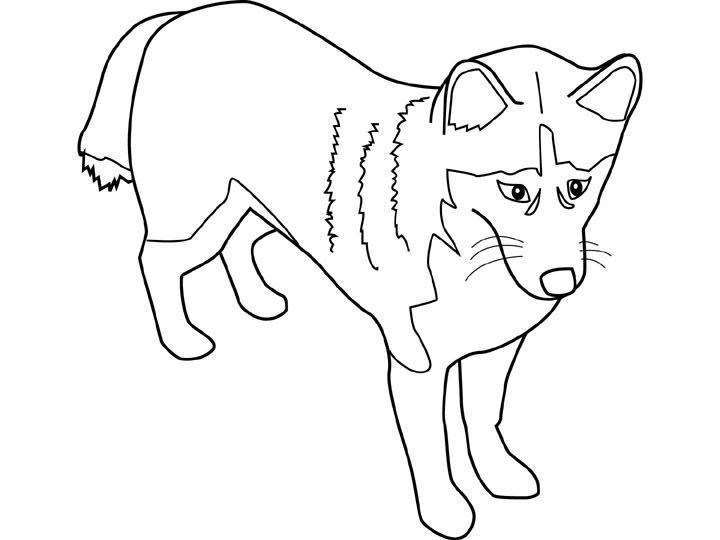 Coloriage a imprimer chien husky syberien gratuit et colorier - Chiot a colorier ...