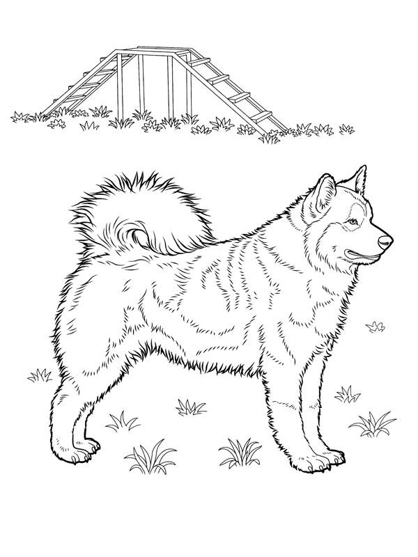 Coloriage a imprimer chien husky gratuit et colorier - Coloriage de chiot a imprimer ...