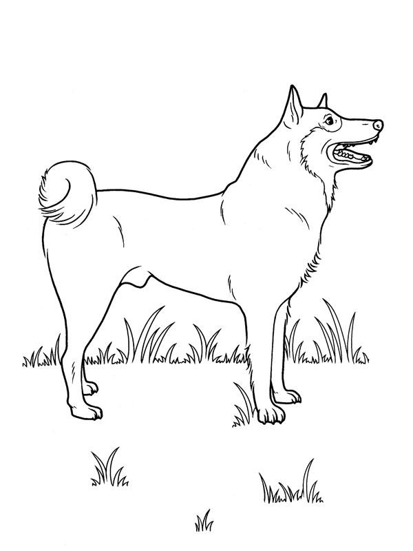 Coloriage a imprimer chien loup gratuit et colorier - Image loup dessin ...