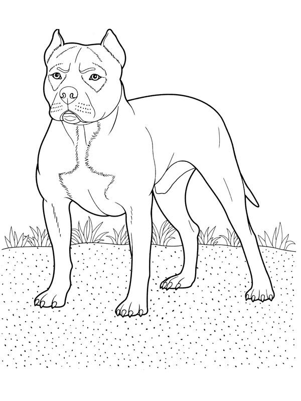coloriage chien pitbull - Coloriage Chien