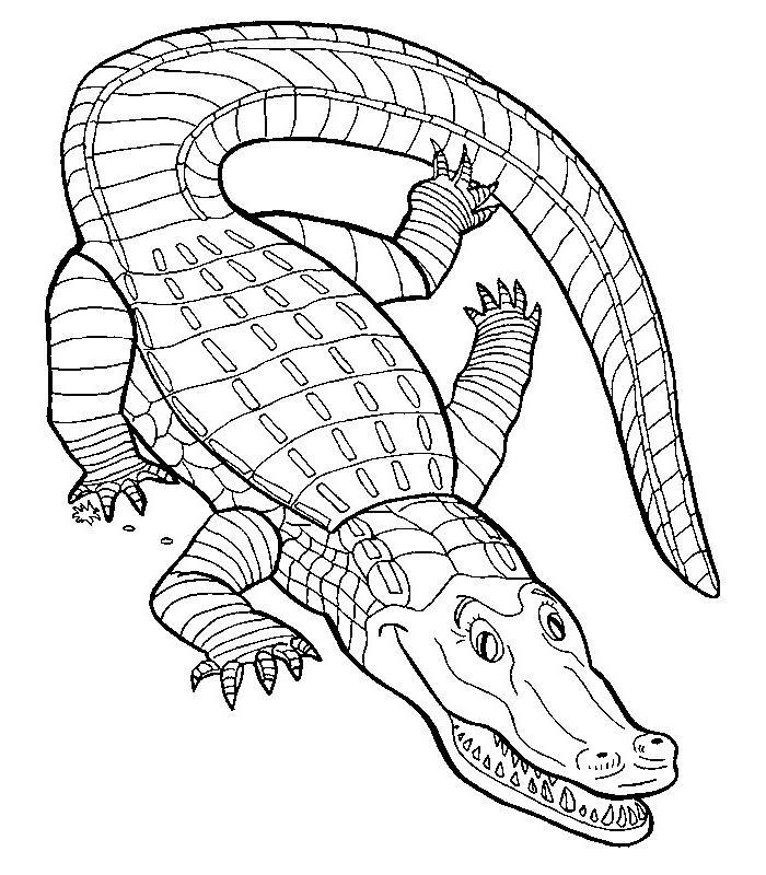 Coloriage a imprimer crocodile aux grands yeux gratuit et - Jeux de crocodile sous la douche gratuit ...
