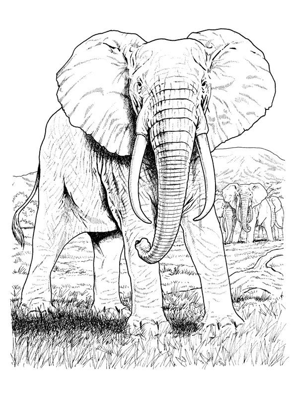 Coloriage A Imprimer Elephants Dans La Savane Gratuit Et