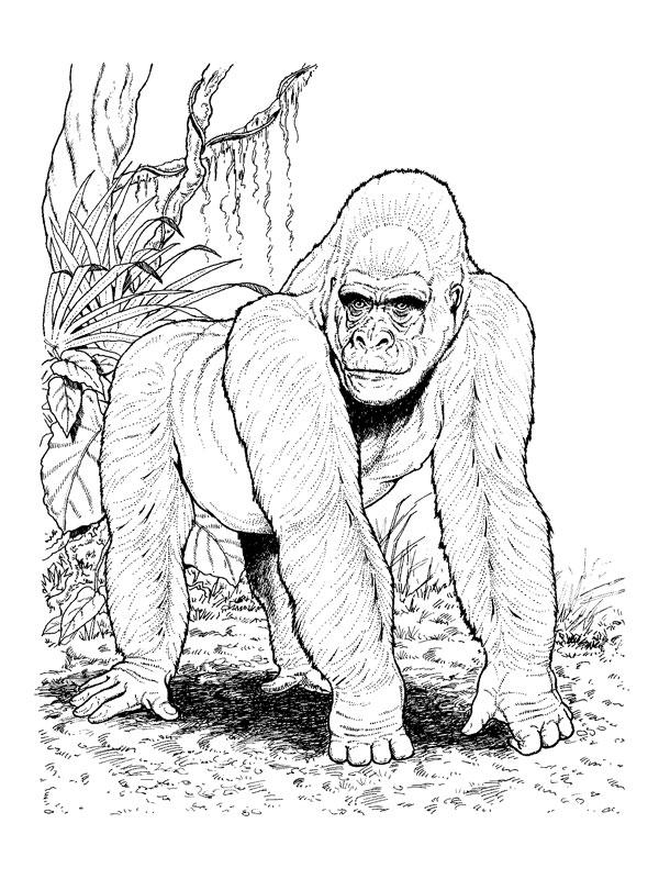 Coloriage a imprimer grand gorille gratuit et colorier - Gorille coloriage ...