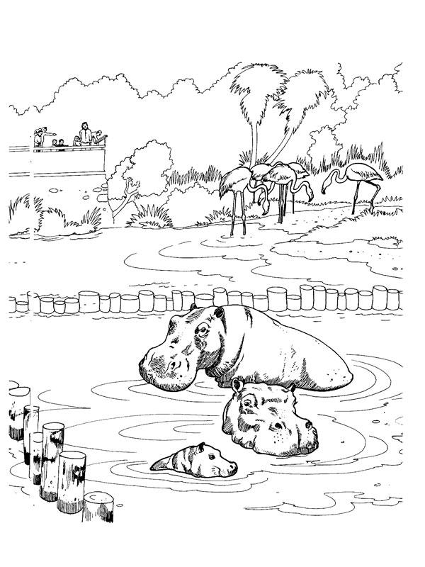 Coloriage a imprimer hippopotames au zoo gratuit et colorier - Coloriage de zoo ...