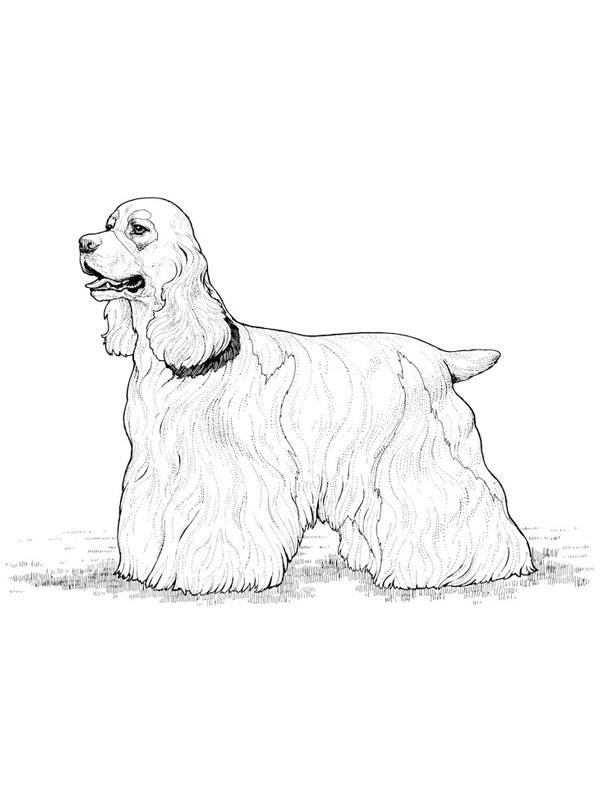 Coloriage a imprimer joli chien cocker gratuit et colorier - Dessin de cocker ...