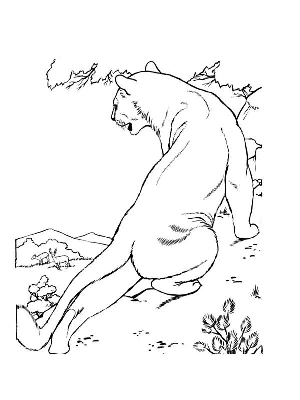 Coloriage a imprimer lionne en chasse gratuit et colorier - Lionne dessin ...