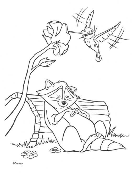 Coloriage a imprimer meeko et split l oiseau mouche gratuit et colorier - Oiseau mouche dessin ...
