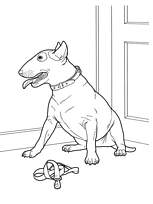coloriage chien bull terrier