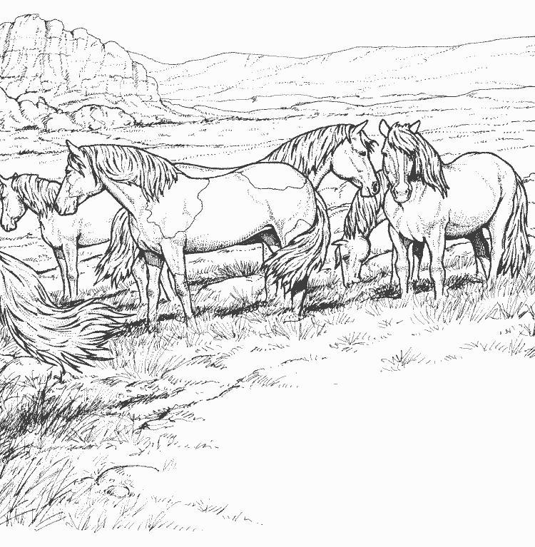 Coloriage a imprimer troupeau de mustang gratuit et colorier - Coloriage cheval sauvage ...